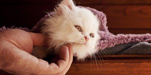 Cumple el calendario de vacunas de tu gato