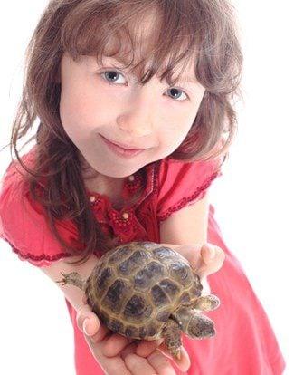Una tortuga es una de las mascotas preferidas