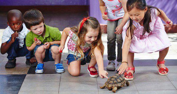 Suelen ser una mascota muy común entre los niños