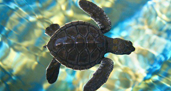 Las tortugas de agua suelen vivir en las zonas más cálidas del planeta