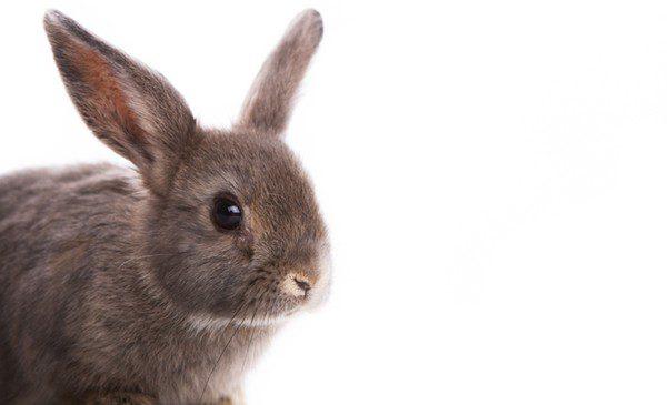 Los conejos son poco dóciles y hay que educarlos desde el primer día