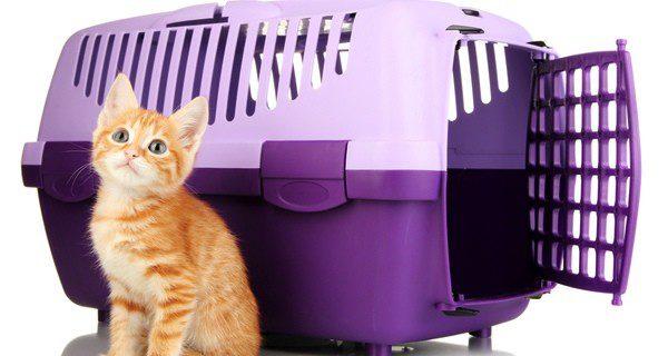 Utiliza el transporte más adecuado para tu gato