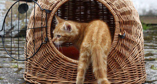 Introduce una manta o un juguete para que el gato se encuentre lo más cómodo posible