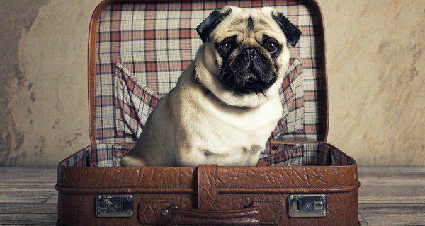 El estrés y la falta de movimiento son los peores enemigos de un transporte tranquilo