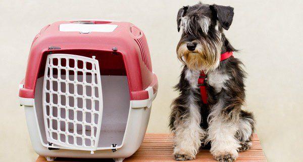 No olvides cumplir con la normativa de transporte de animales