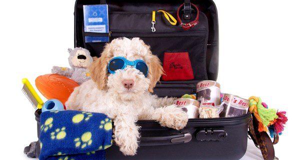 Viajar junto a nuestro perro es la opción más popular