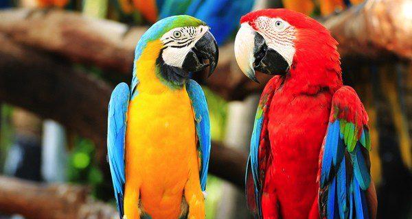 Con paciencia se consigue enseñar a hablar a un pájaro