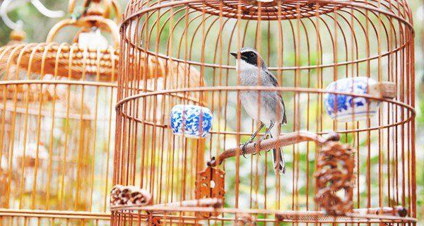 En libertad los pájaros cantan mucho más que cuando están enjaulados