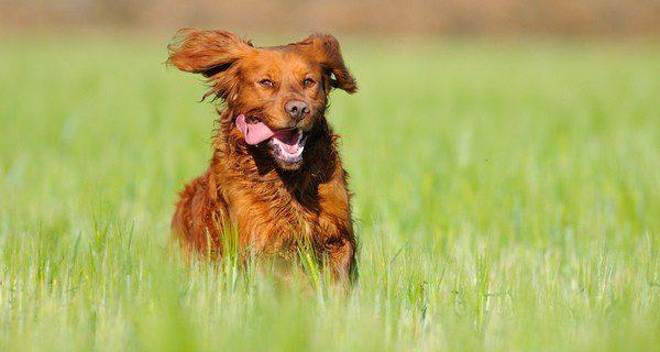 Hay perros que necesitan hacer ejercicio a diario