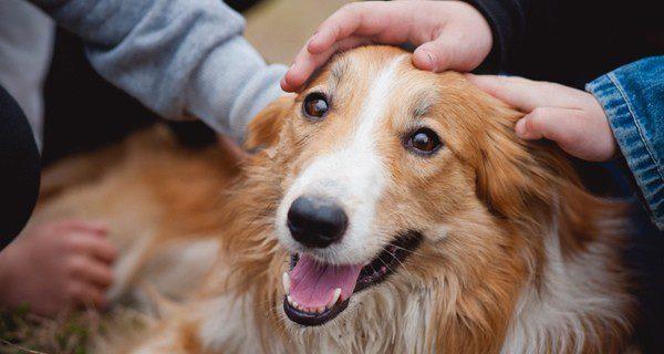 Ayuda a tu perro a ser feliz