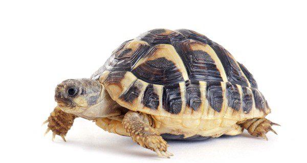 Aprende sobre la alimentación de las tortugas