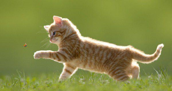 ¿Cómo puedes sustituir al gato fallecido?