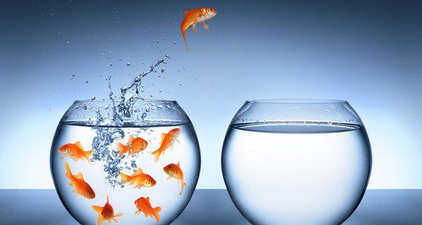 Hay que tener a los peces en cuarentena para evitar contagios