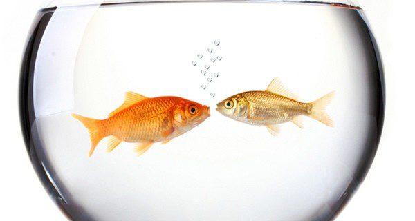 ¿Qué hacer para salvar al pez?