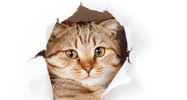 Los gatos son muy territoriales