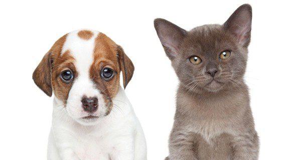 Los gatos son más independientes que los perros