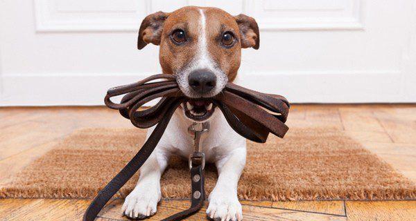 ¿Sabes cómo elegir la correa más adecuada para tu perro?
