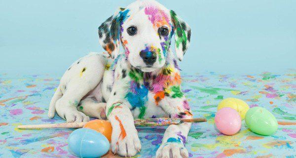 Normas y consejos para educar a tu perro[