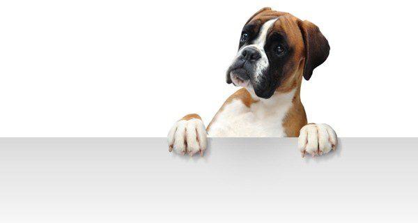 ¿Cómo quieres llamar a tu perro?