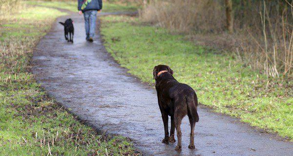 Abandonar a tu perro es un acto deplorable y egoista