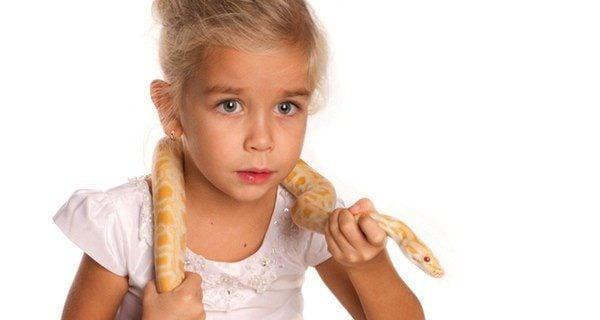 ¿Qué peligros corres al tener una serpiente en casa?