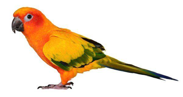 Los pájaros y los peces serán las mascotas más apropiadas