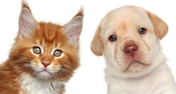 Los perros y los gatos no son enemigos naturales