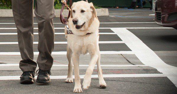 Los buenos hábitos marcan el carácter del perro