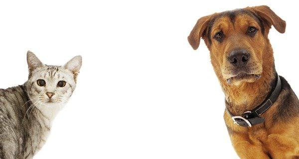 El síndrome vestibular afecta a los mamíferos y es común encontrarlo en perros y gatos