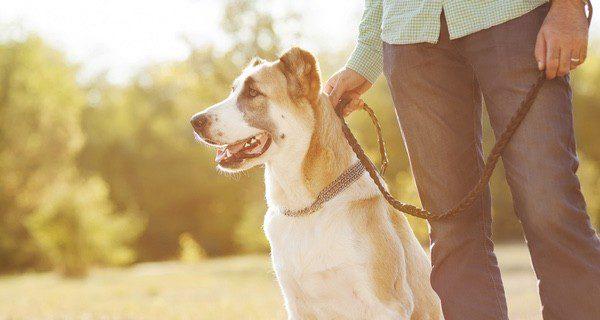 El paseo es una actividad saludable para ambos