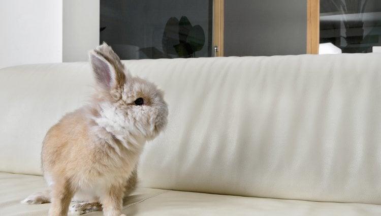 El conejo requiere una serie de cuidados pero no tantos como otros animales