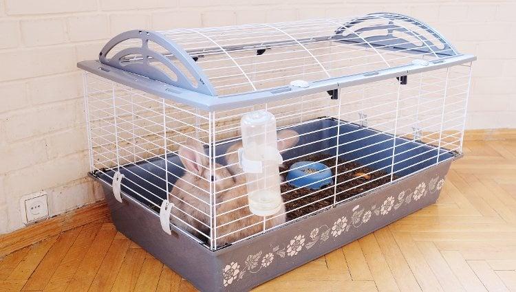 Al estar en una jaula a menudo es más sencilla su limpieza