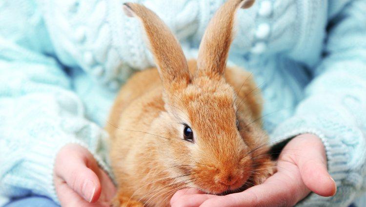 Tener un conejo también requiere una serie de responsabilidades