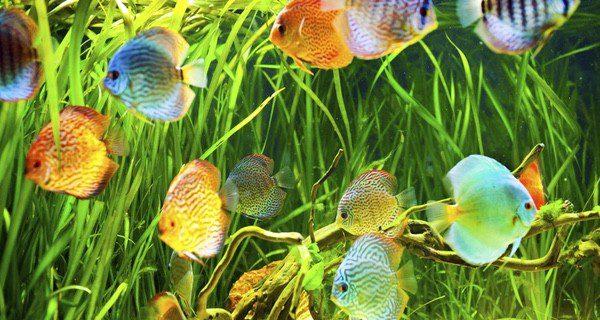 Los peces dan poco trabajo como animal de compañía