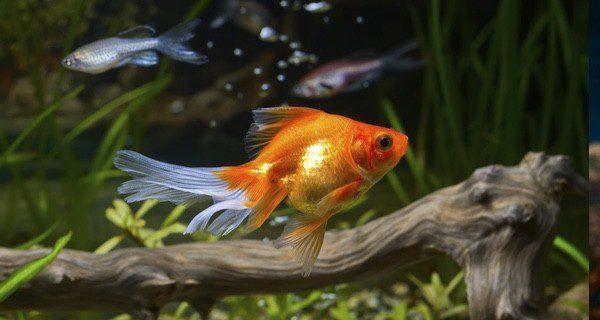 Observa que las escamas y los ojos los peces mantienen su apariencia habitual