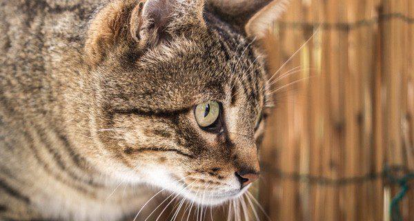 Los ojos son una parte muy delicada de los gatos