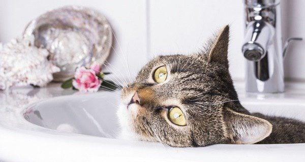 Sé persistente con la limpieza de los ojos de tu gato