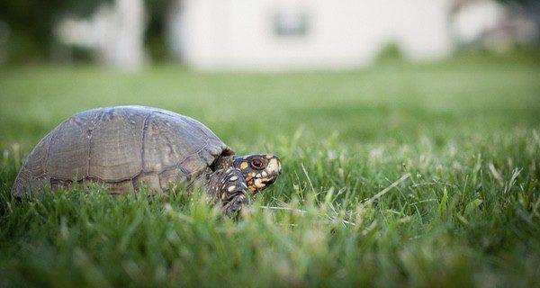 La tortuga debe tener espacio suficiente para andar y nadar