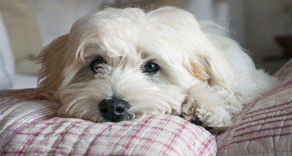 La muerte de una mascota es ley de vida