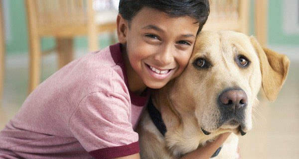 Es raro que un Labrador ladre o entre en conflicto con otros perros