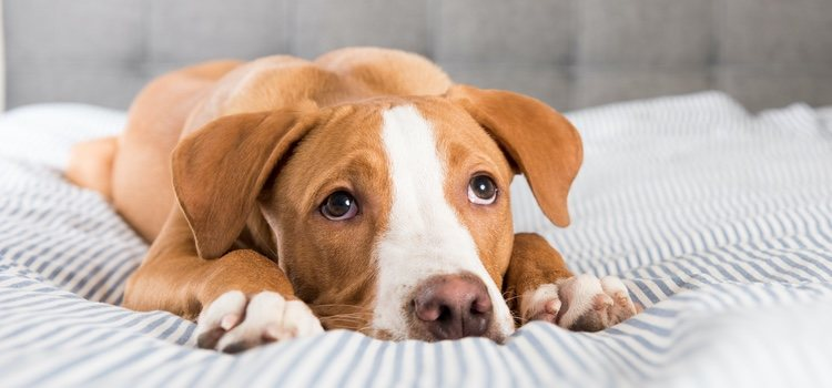 Es fundamental que acudas al veterinario para poner solución a este problema