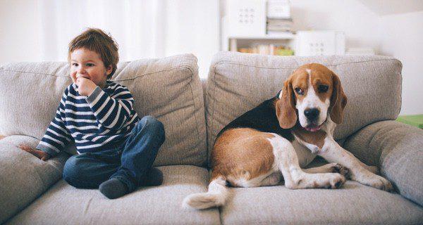 Son perros pacientes, obedientes y tranquilos, pero también activos e ideales para pasar el tiempo con los niños