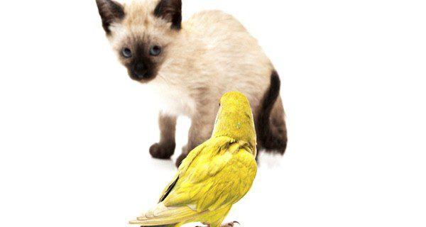 Los agapornis son unos pájaros muy sociales