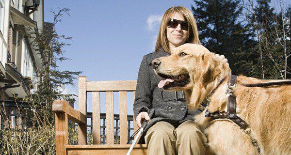 Tienen muy buen carácter y ayudan a personas mayores y con discapacidad por su comportamiento e inteligencia