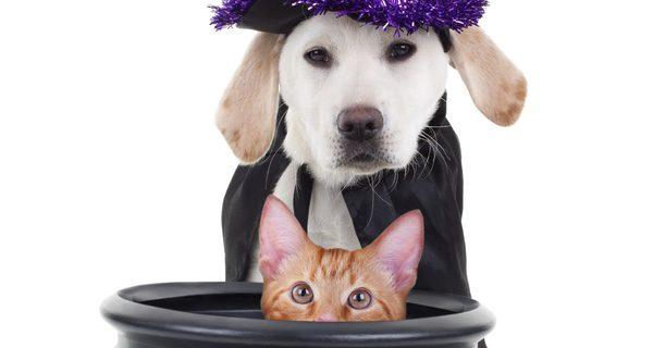 Es un día divertido, así que elabora tu mismo traje y diviértete con tu perro