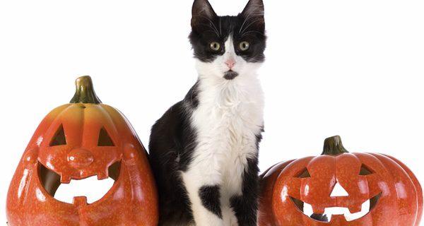 Gatos en la noche de Halloween