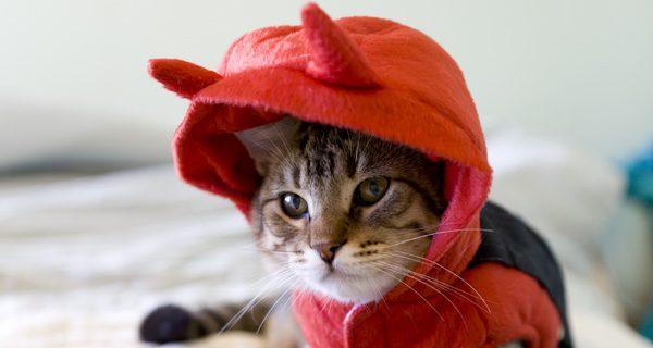 Elige el disfraz más divertido para tu gato