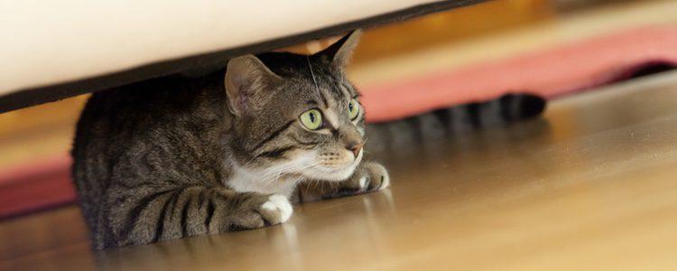 Los cambios afectan al comportamiento de los gatos