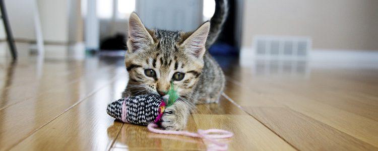 Jugar con los felinos es una de las mejores medicinas