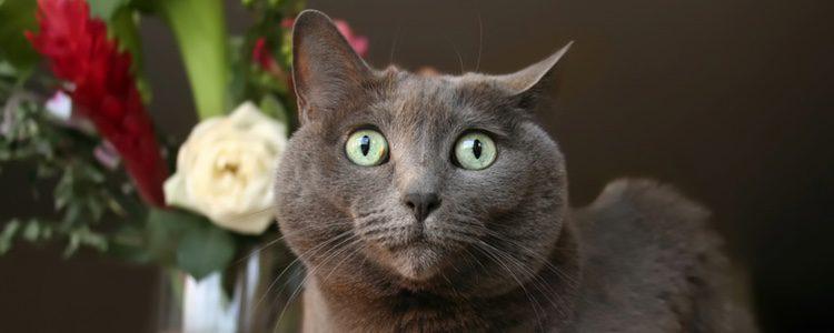 Los gritos y la música alta son una de las causas de estrés felino